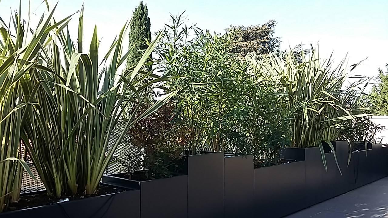 Terrazzi e giardini pensili l 39 albero maestro for Piante per terrazzo